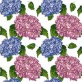 Hydrangea vector seamless pattern with green leaves, imitating ink and watercolor on white background. Hand-drawn flower heads.