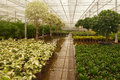 Hydroculture plant nursery in the Netherlands Stock Photo