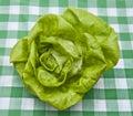 Hydroponic Bibb Lettuce Stock Photo