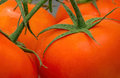 Hydroponic tomatoes macro view of a few hydroponically cultivated focusing on the sepal and stem Stock Photo