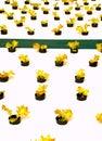 Hydroponic  Vegetable  03 Stock Photos