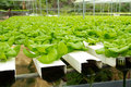 Hydroponic vegetable farm Royalty Free Stock Photography