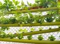 Hydroponic Vertical Earth Garden