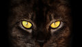 Hypnotic Cat Eyes On Black Bac...