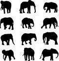 I generi del mondo tre di elefanti Fotografia Stock