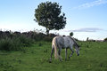 I heard a neigh horse start to run after few camera shutter click it was very nice view from farm in peak district national park Stock Photos