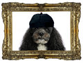 I am king Tom Royalty Free Stock Photo