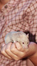 I love being on the front cream colored mice hand for customers to buy market sunday Royalty Free Stock Photography