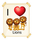 I love lions Royalty Free Stock Photo