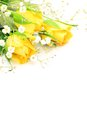 I took yellow rose haze grass white background Royalty Free Stock Photos