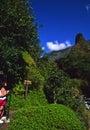 Iao Needle Maui Royalty Free Stock Photo