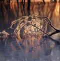 Ice branch in the frozen river Royalty Free Stock Photo
