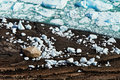 Ice chunks on the edge of a frozen lake are bright blue in color from glacier Royalty Free Stock Photos