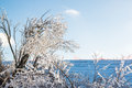 Ice covered branches snow covered field beautiful glass like after freezing rain storm on winter day beautiful winter day in Royalty Free Stock Images