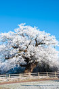 Ice covered shelter and oak tree. Royalty Free Stock Images