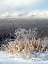 Ice covered weeds and mountain Royalty Free Stock Images