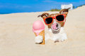 Ice cream dog Royalty Free Stock Photo