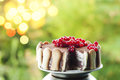 Ice cream tiramisu cake with cranberries Royalty Free Stock Photo