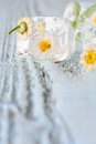 Ice cube with frozen flowers on wooden table Royalty Free Stock Image