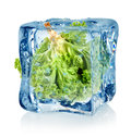 Ice cube and lettuce Royalty Free Stock Image