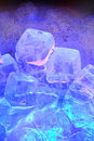 Ice cubes with dark background Stock Images