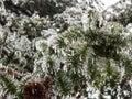 Ice freezed trees Royalty Free Stock Image