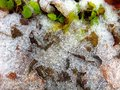 Ice and green plants thin covering fallen leaves still autumn fall season background Stock Image