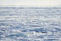 Ice pack covered ocean on a sunny cold winter day Royalty Free Stock Photos