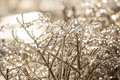 Ice plants trapped in winter frosts coated with Stock Photography