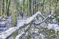 Ice and snow on fallen branch at a northern river