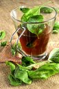 Ice tea hot drink infusion english earl grey witn basil Royalty Free Stock Images