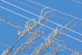 Ice on wires the is undoubtedly beautiful Royalty Free Stock Photos