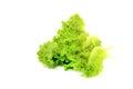 Iceberg lettuce Royalty Free Stock Photo