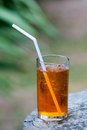 Iced tea tall glass of cold Stock Image