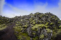 Iceland lava field path though moss covered in southern Royalty Free Stock Photo