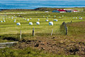 Iceland, west fjords, green landscape and typical bales of hay Royalty Free Stock Photo