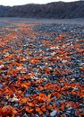 Icelandic black beach with lava rocks snaefellsnes peninsula iceland Royalty Free Stock Images