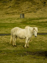 Icelandic farm horses in south iceland Stock Photos