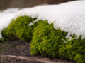 Icey moss snow on at ohiopyle state park pa Stock Image