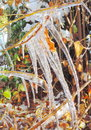 Icicle close up of background Royalty Free Stock Photo
