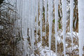 Icicle in a cold winter Royalty Free Stock Photo