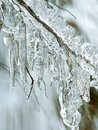 Icicles from melting snow in winter Royalty Free Stock Photo