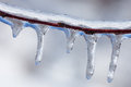 Icicles on twig formed during a winter freezing rain event Royalty Free Stock Photo