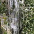 Icicles winter freezing ice cold frigid Royalty Free Stock Photos