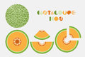 Icon set of cantaloupe and melon graphic with circular shape design.