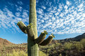 Iconic southwest desert scene a majestic saguaro cactus towers above the colorful sonoran landscape beneath a canopy of white Royalty Free Stock Images