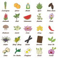 Icons for aromatic plants, herbas and woods