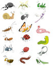 Icono insecto