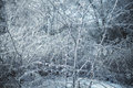 Icy branches photo of winter nature with Royalty Free Stock Photos