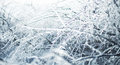 Icy branches photo of winter nature with Stock Image
